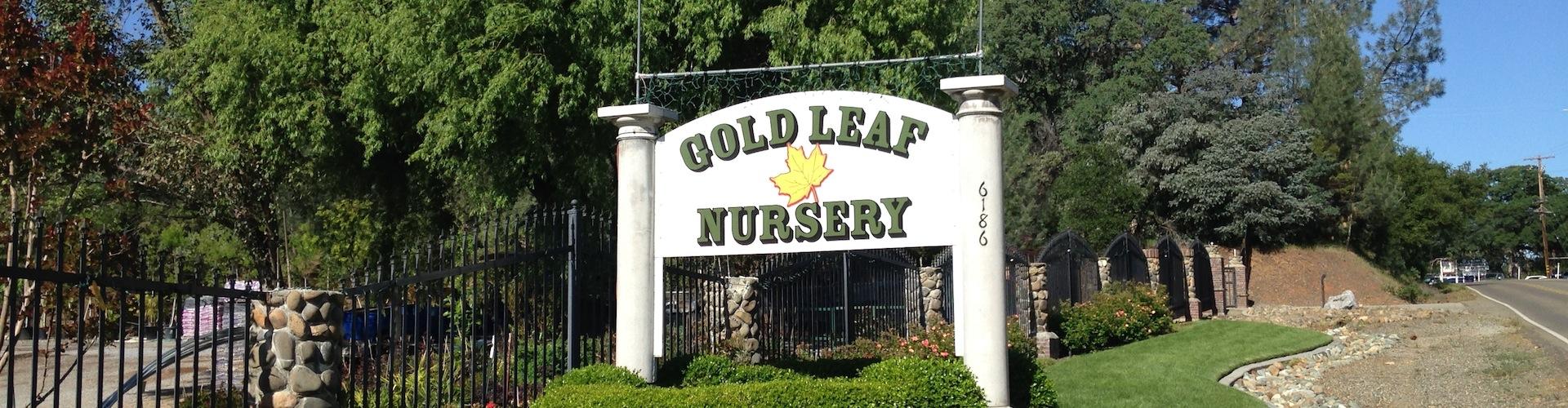 Gold-Leaf-Nursery-Landscaping