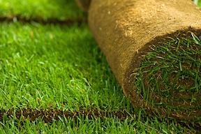 Delta Blue Grass Sod
